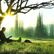 tree readers slider
